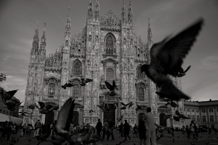 milanbirds